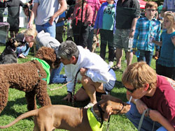 2015 Walk for the Animals and Bark in the Park Pet Expo