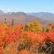 WHITE MOUNTAIN FOLIAGE